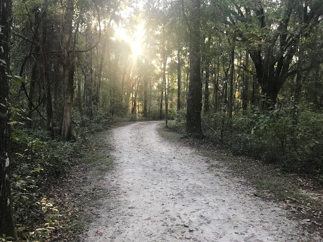 Move walkers will hike the smooth path on the Miccosukee Greenway on Sunday.