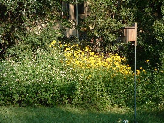 Hedgerow helps attract songbirds.