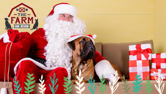 What a cute keepsake! Get your pet's photo taken with Santa Claus.