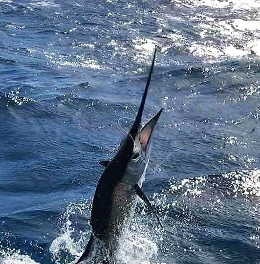 Fish Heads Invitational: Alikai hangs on, wins sailfish tournament