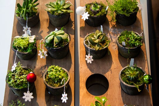 Succulents are displayed on Friday, Nov. 30, 2018, at Beno's Flowers on Iowa Avenue in Iowa City.