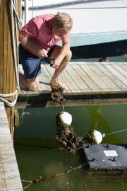 Jim Timmerman of Ocean Habitats pulls up a mini reef working underneath his Marco Island dock.