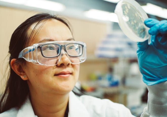 civil engineering Assistant Professor Yanyan Zhang examines a petri dish containing bacteria from treated wastewater as part of her National Institutes of Health-funded research.