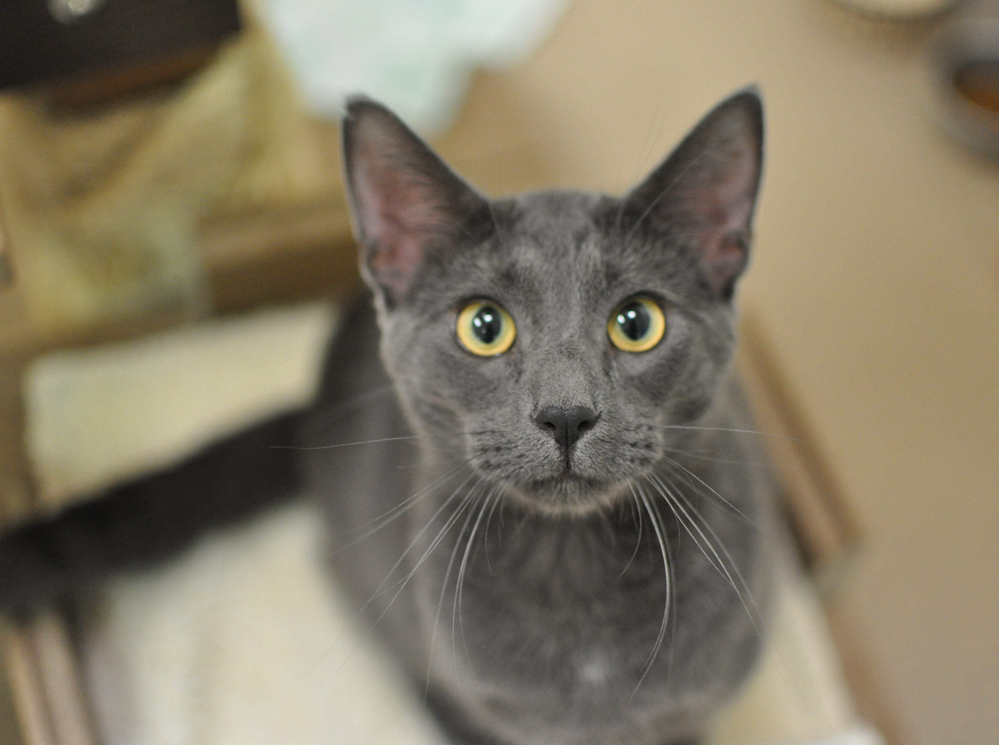 Turkey, 1, loves playing with his friends, Ritty and Domino. He is neutered.