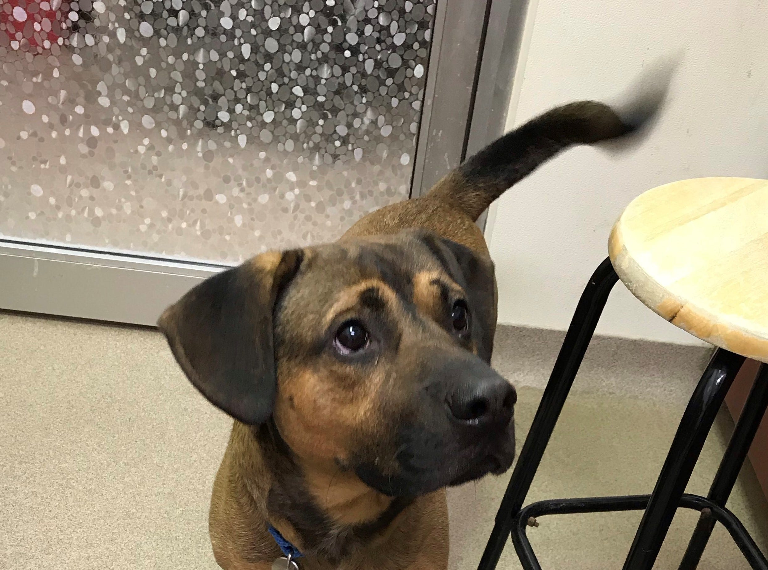 Zeke, a 2-year-old mixed breed, loves to run and play with other dogs. He is spayed.