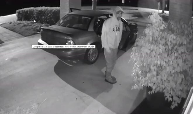 Law enforcement officials are searching for a man who was caught on camera stealing a ficus Nov. 18 from in front of the Gonzales United Methodist Church in Cantonment.