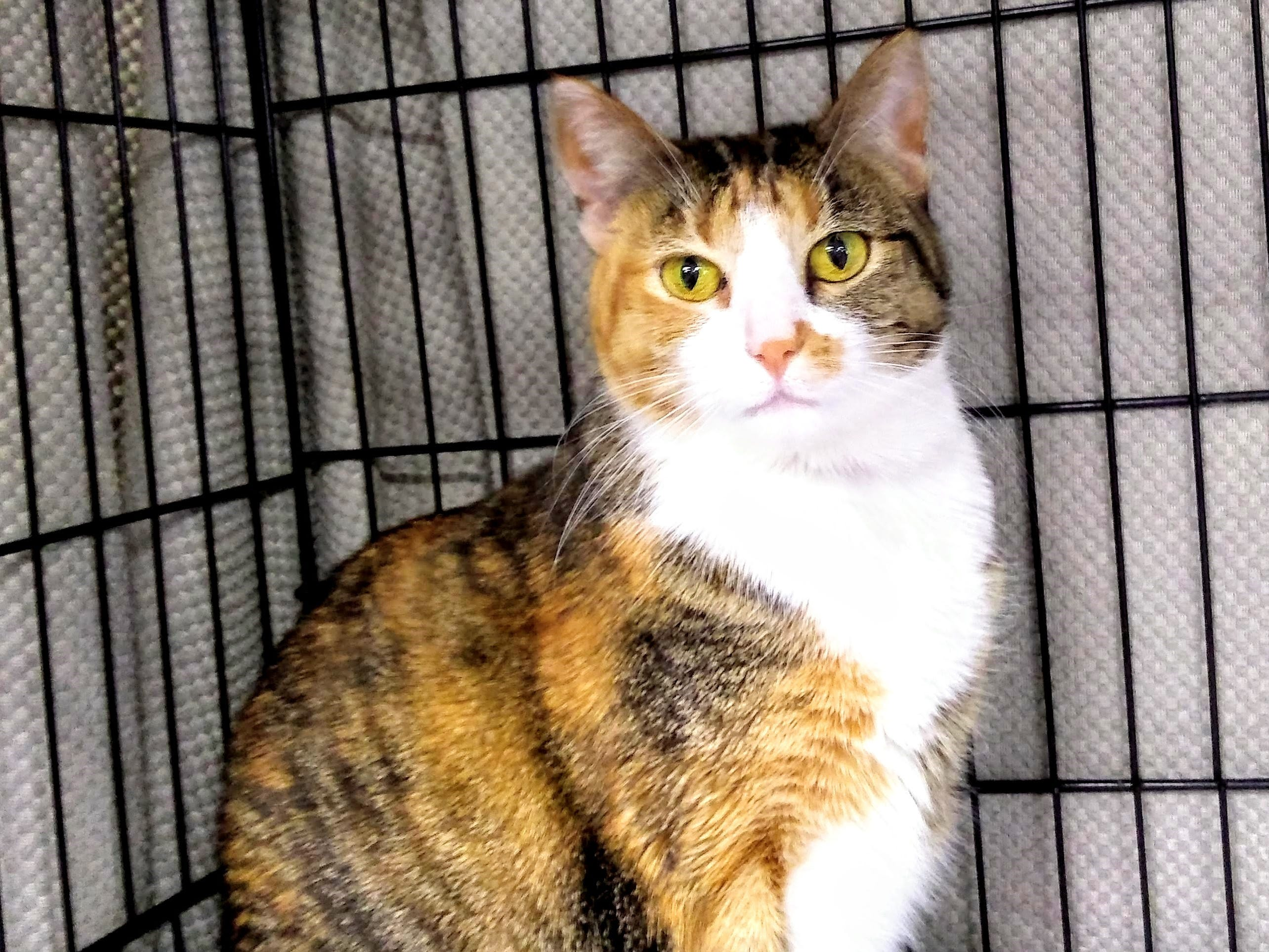 Emma is a 3 1/2-year-old Torbie who loves to cuddle during the night time and loves to sleep with kids. She is good with children of all ages and likes to be held. For more information, visit www.sfof.org or call 503-362-5611.
