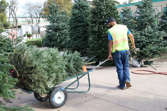Juan, an employee at McShane's Landscape Supply who has seen eight Christmas seasons at the company, loads a tree a customer purchased.