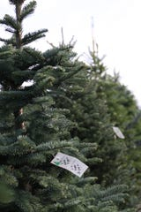 A price tag rests on a Christmas tree at McShane's Landscape Supply