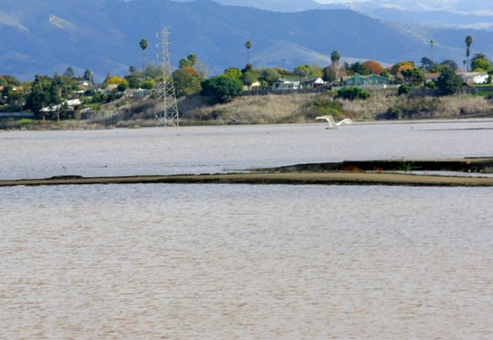 A bird on Friday flies over Carr Lake, which has grown from recent storms in Salinas.