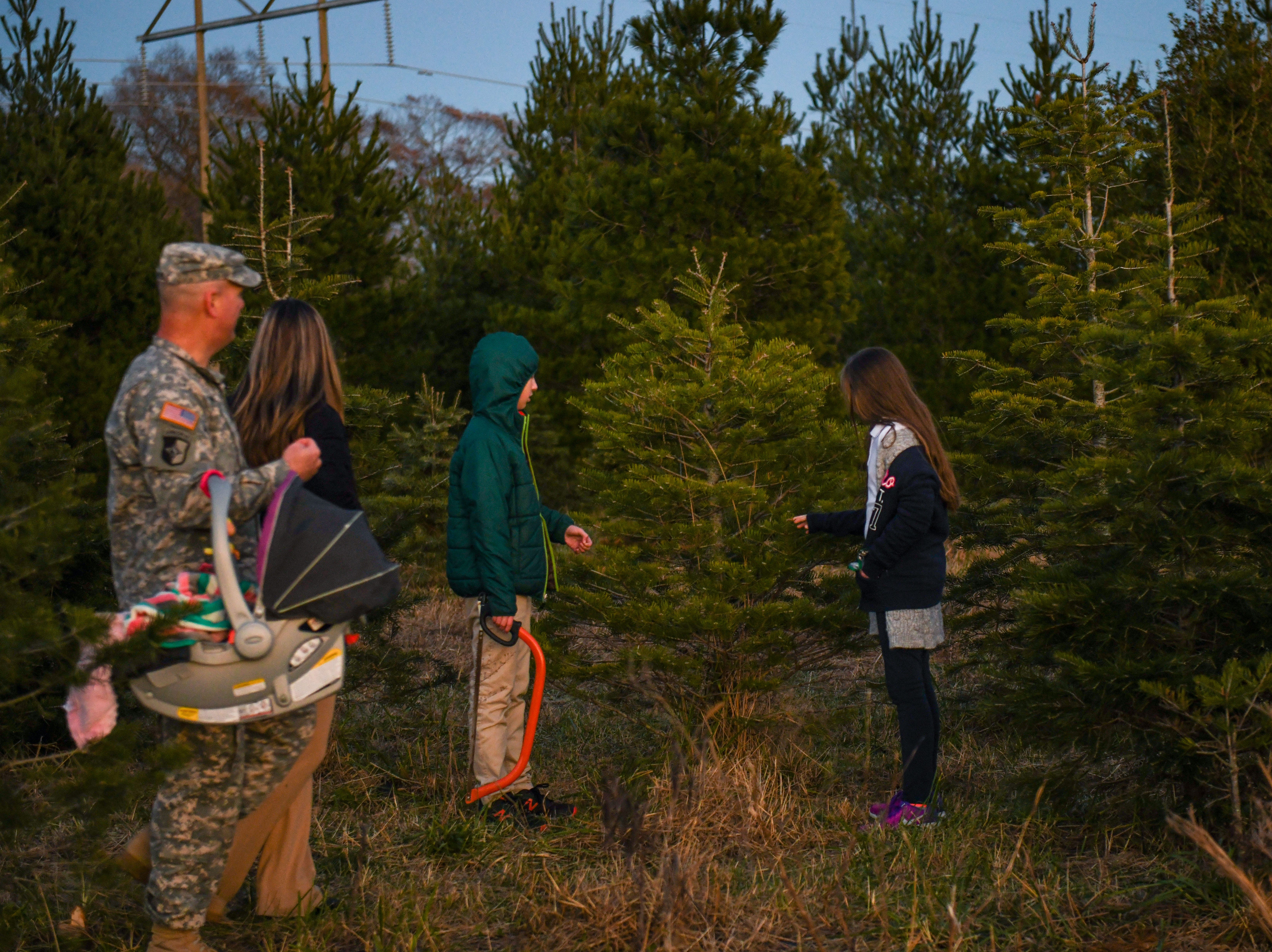 The Nichols family searches for a Christmas tree at Nichols Tree Farm in Hebron on Thursday, Nov 30, 2018.