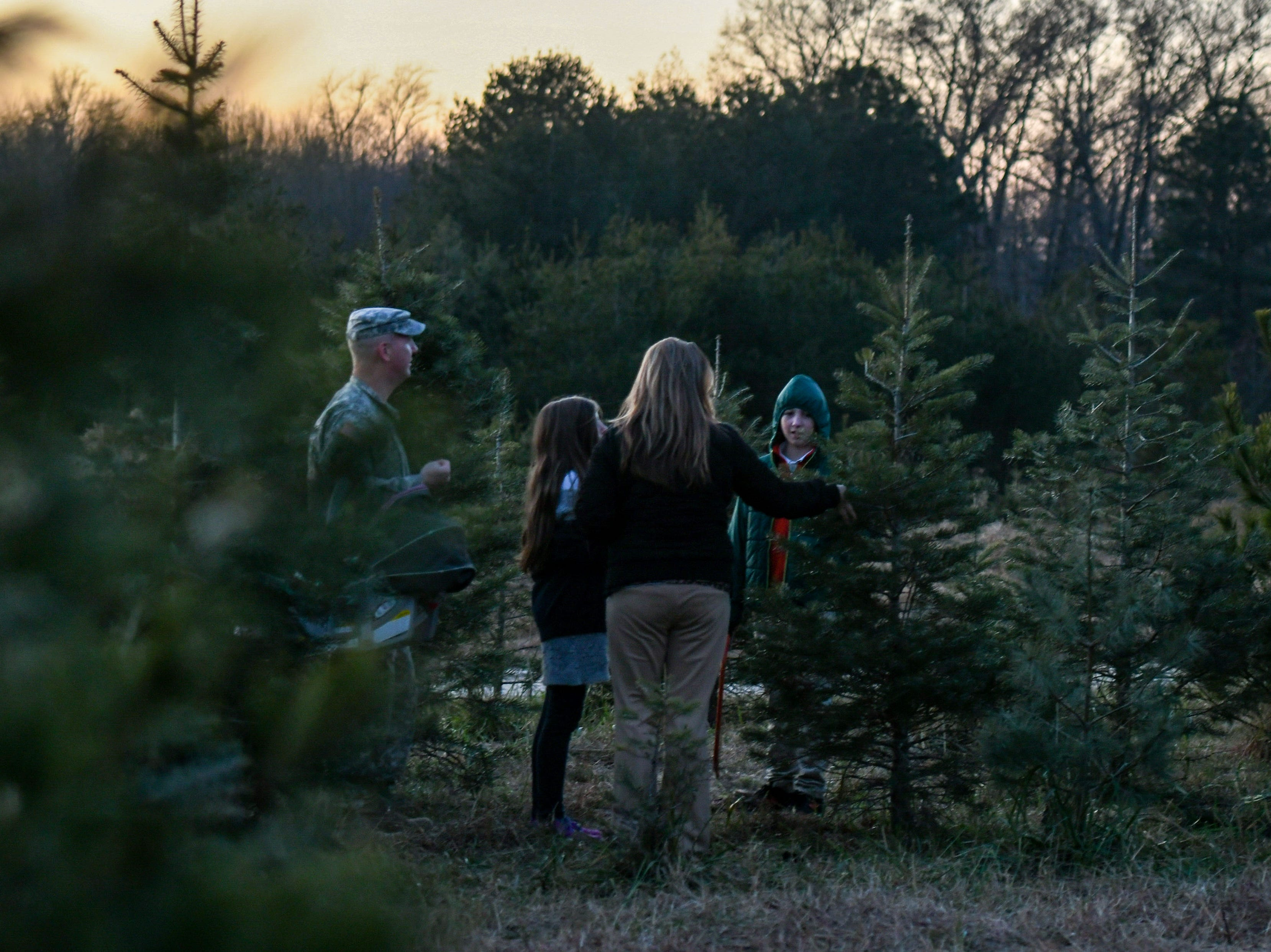 The Nichols family searches for a tree at Nichols Tree Farm in Hebron on Thursday, Nov 30, 2018.
