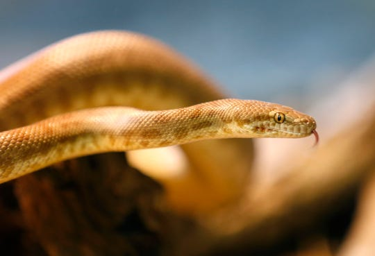 Stock image of a snake.