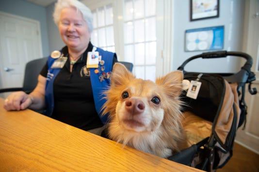News Bayhealth Pet Therapy