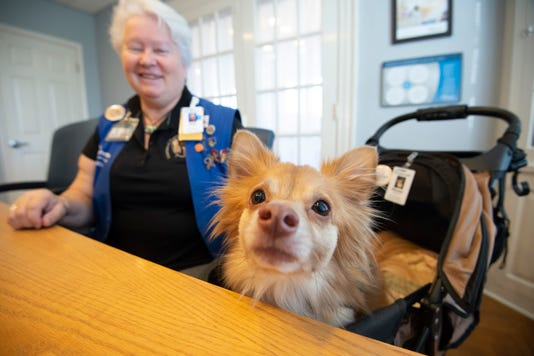News Bayhealth Pet Therapy