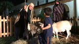 Children interacted with a camel and sheep during a live nativity scene at First Baptist Church in Corpus Christi.