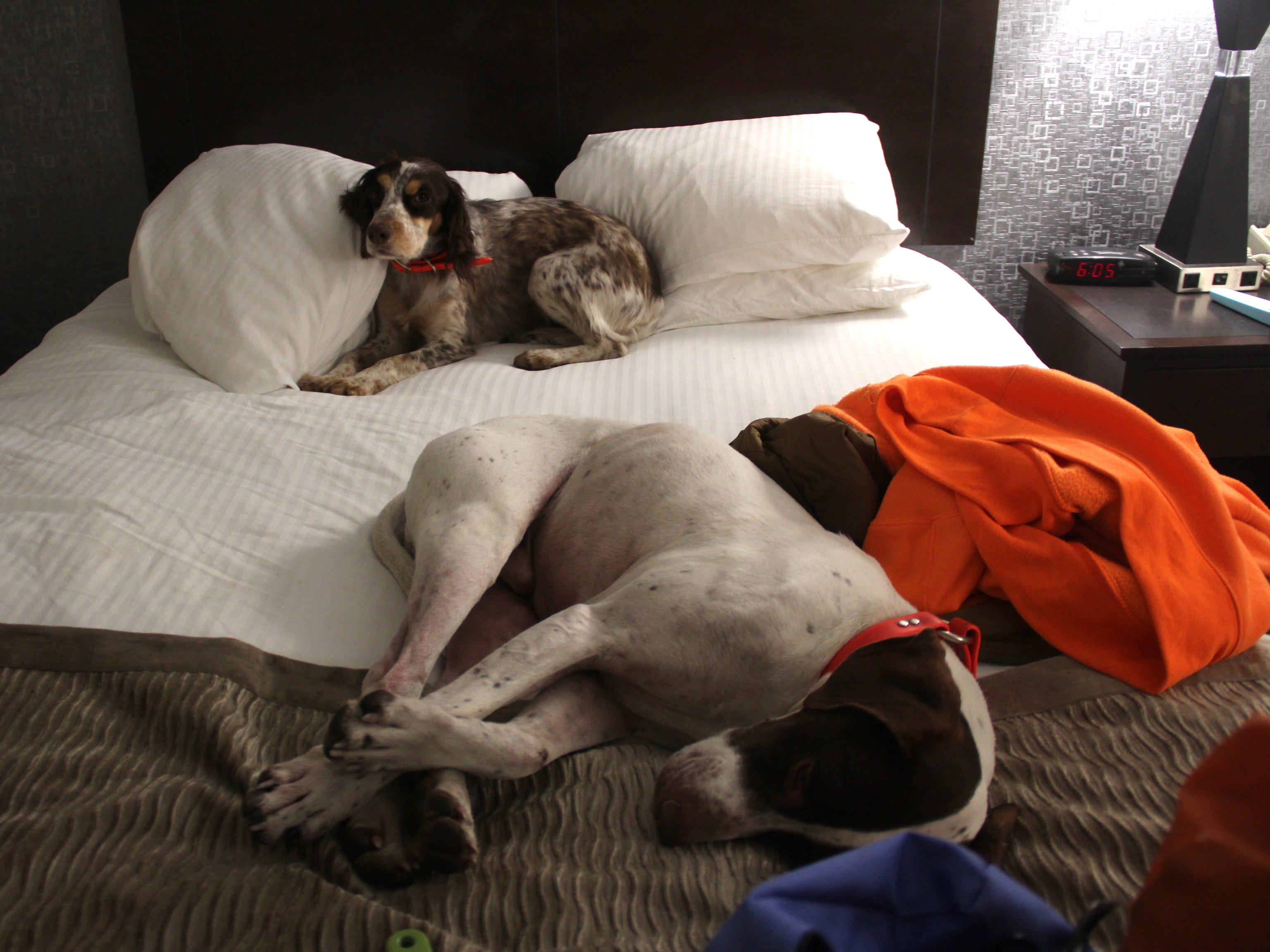 Many hotels in South Dakota, such as the Best Western Ramkota in Aberdeen, welcome hunter and their dogs.