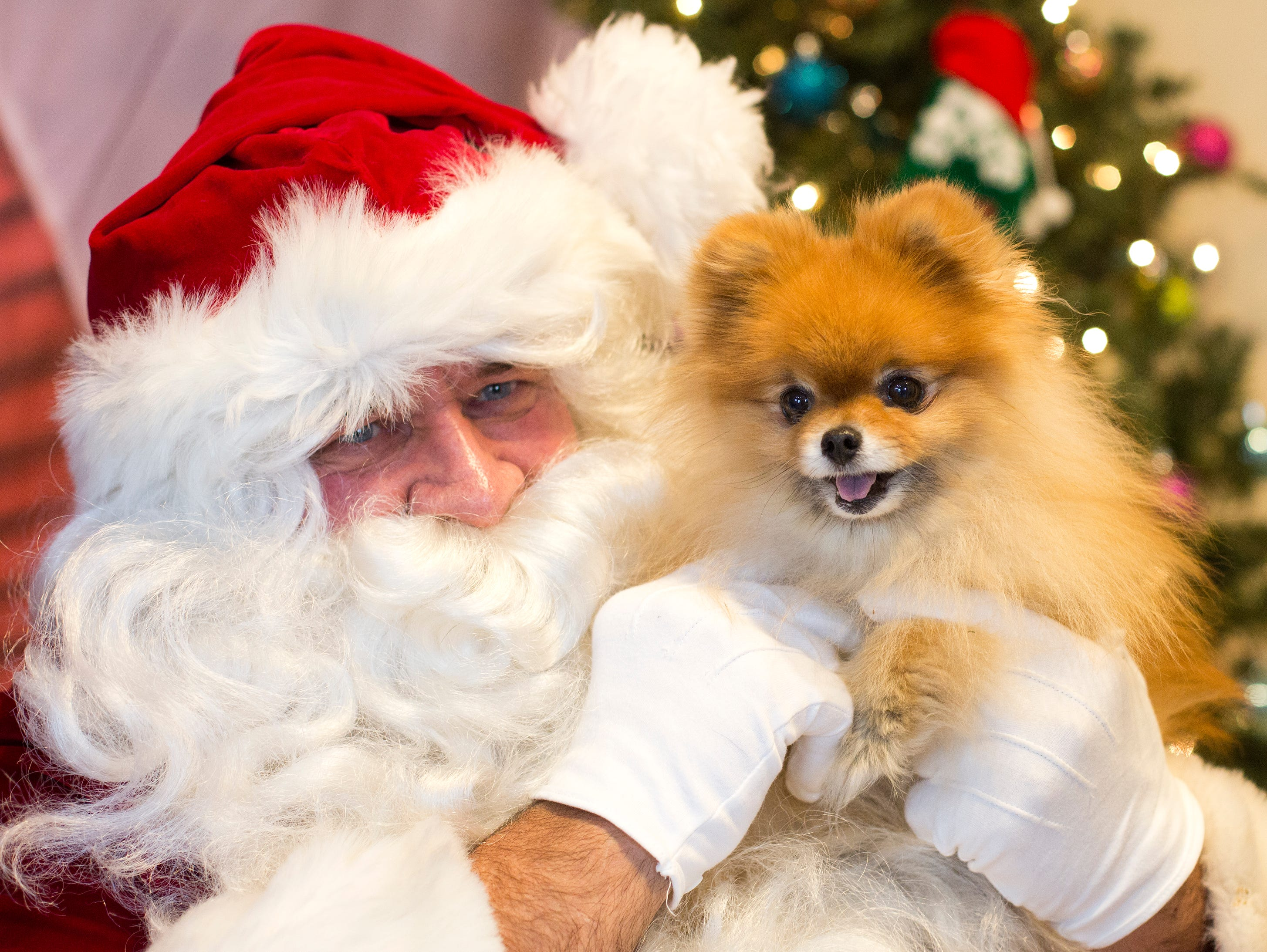 Roxy, a six year old Pomeranian from Hawthorne, meets Santa Claus for the first time during the Santa Paws photo session for pets at the Rampo-Bergen Animal Refuge Inc. in Oakland on Saturday, Dec. 1, 2018. Sponsored by Allstate, all proceeds from the photo sessions go directly towards the care of animals rescued by RBARI.