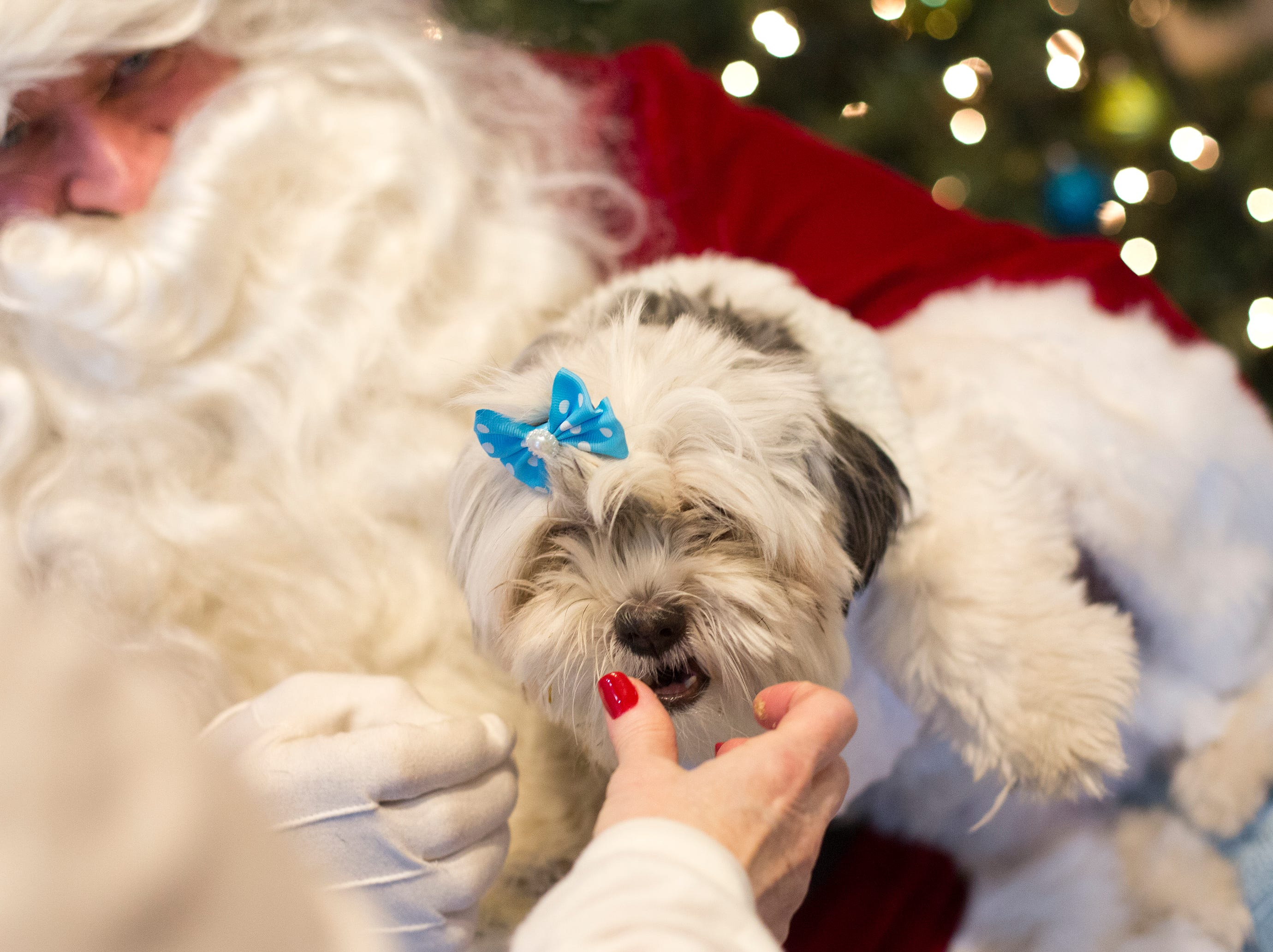 Luna, a one year old rescue dog, receives a touch up from her owner, Maria Sandoval of Belville, during the Santa Paws photo session for pets at the Rampo-Bergen Animal Refuge Inc. in Oakland on Saturday, Dec. 1, 2018. Sponsored by Allstate, all proceeds from the photo sessions go directly towards the care of animals rescued by RBARI.