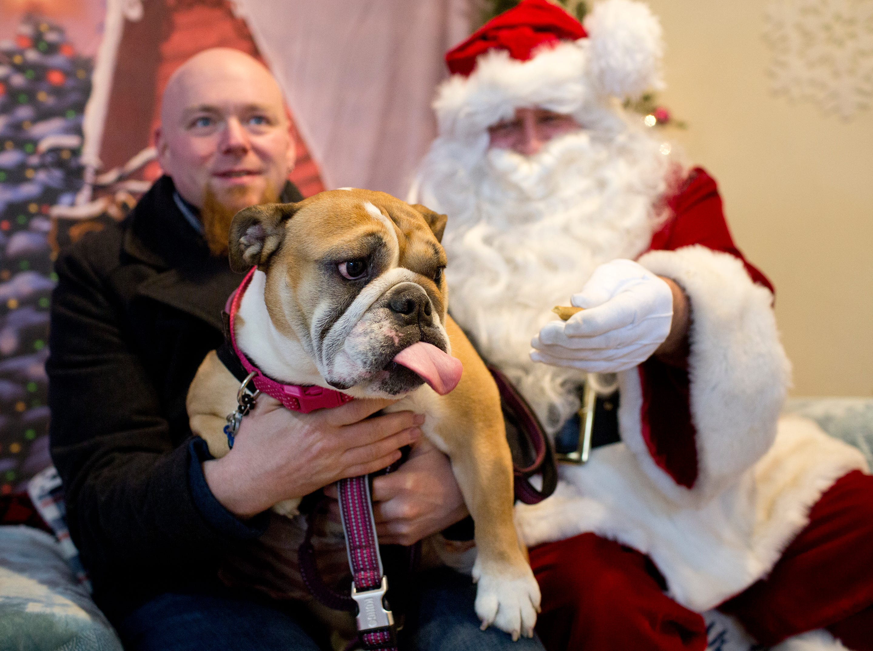 Penny, a five year old English Bull dog, checks out the treat that Santa Claus offers with her tongue but doesn't move too far from her owner Jason Guy of Midland Park during the Santa Paws photo session for pets at the Rampo-Bergen Animal Refuge Inc. in Oakland on Saturday, Dec. 1, 2018. Sponsored by Allstate, all proceeds from the photo sessions go directly towards the care of animals rescued by RBARI.