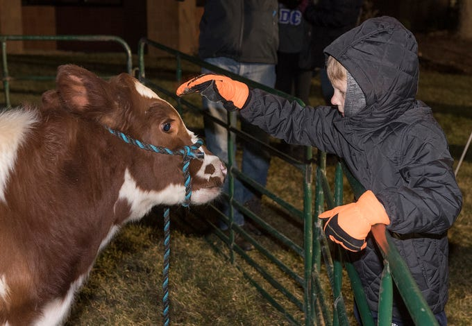 Seven year old Mateo Lindenmeyer makes frinds with a calf at the petting zoo.