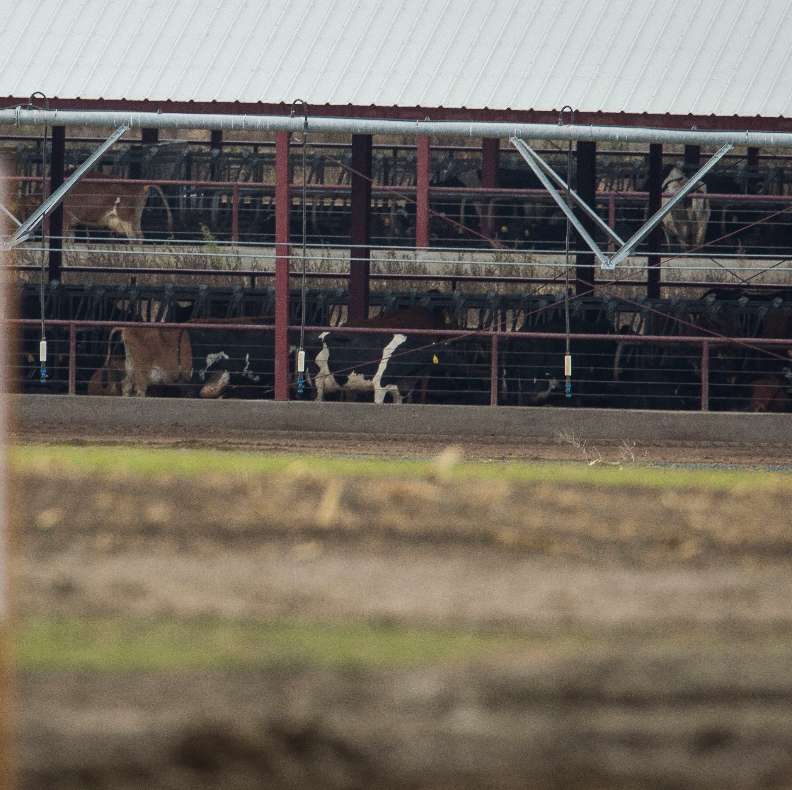 Oregon cites multiple dairies for manure discharge violations