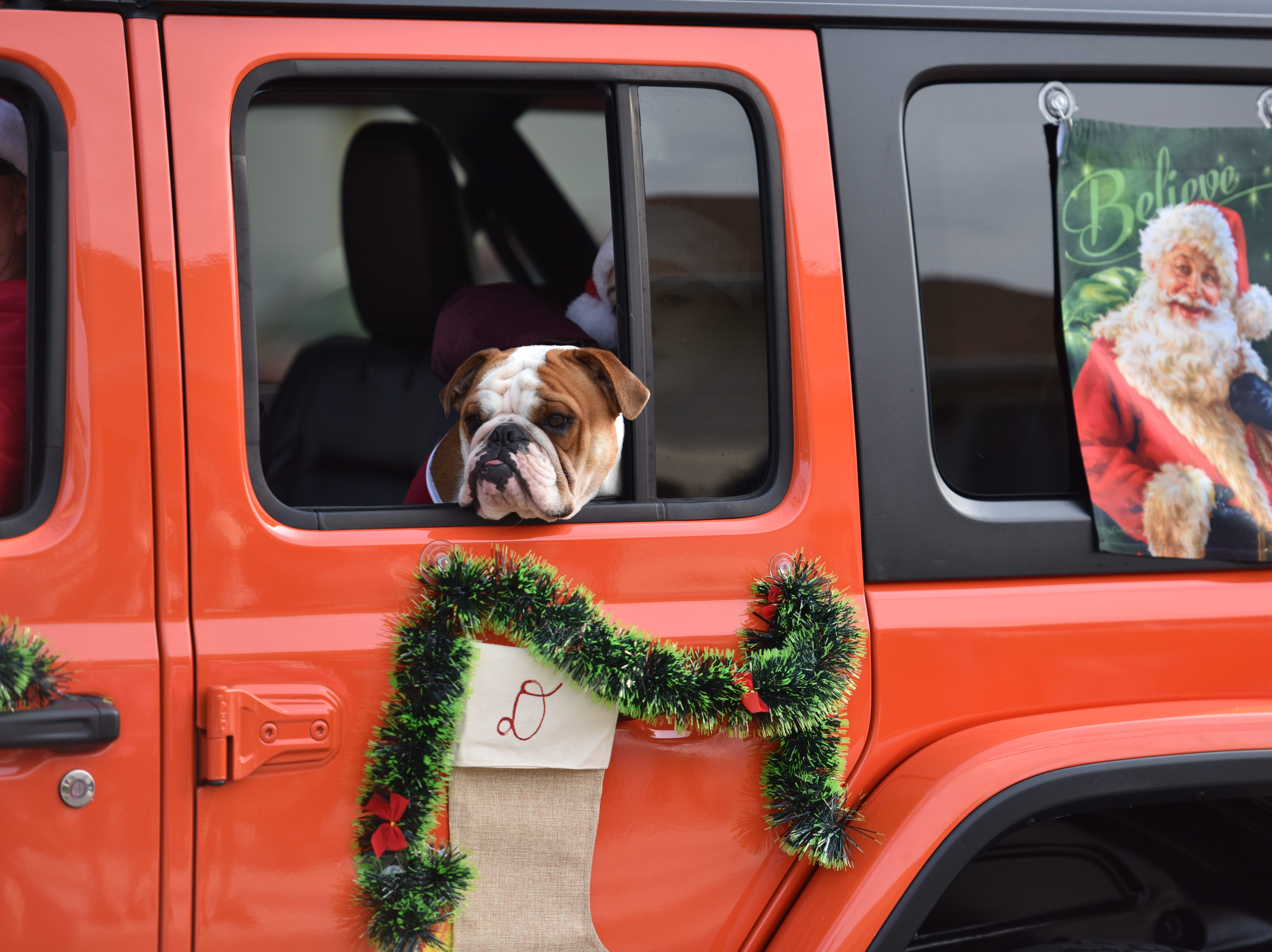 A dog rides  with the Ocean City Jeep Club at the Ocean City Christmas parade.