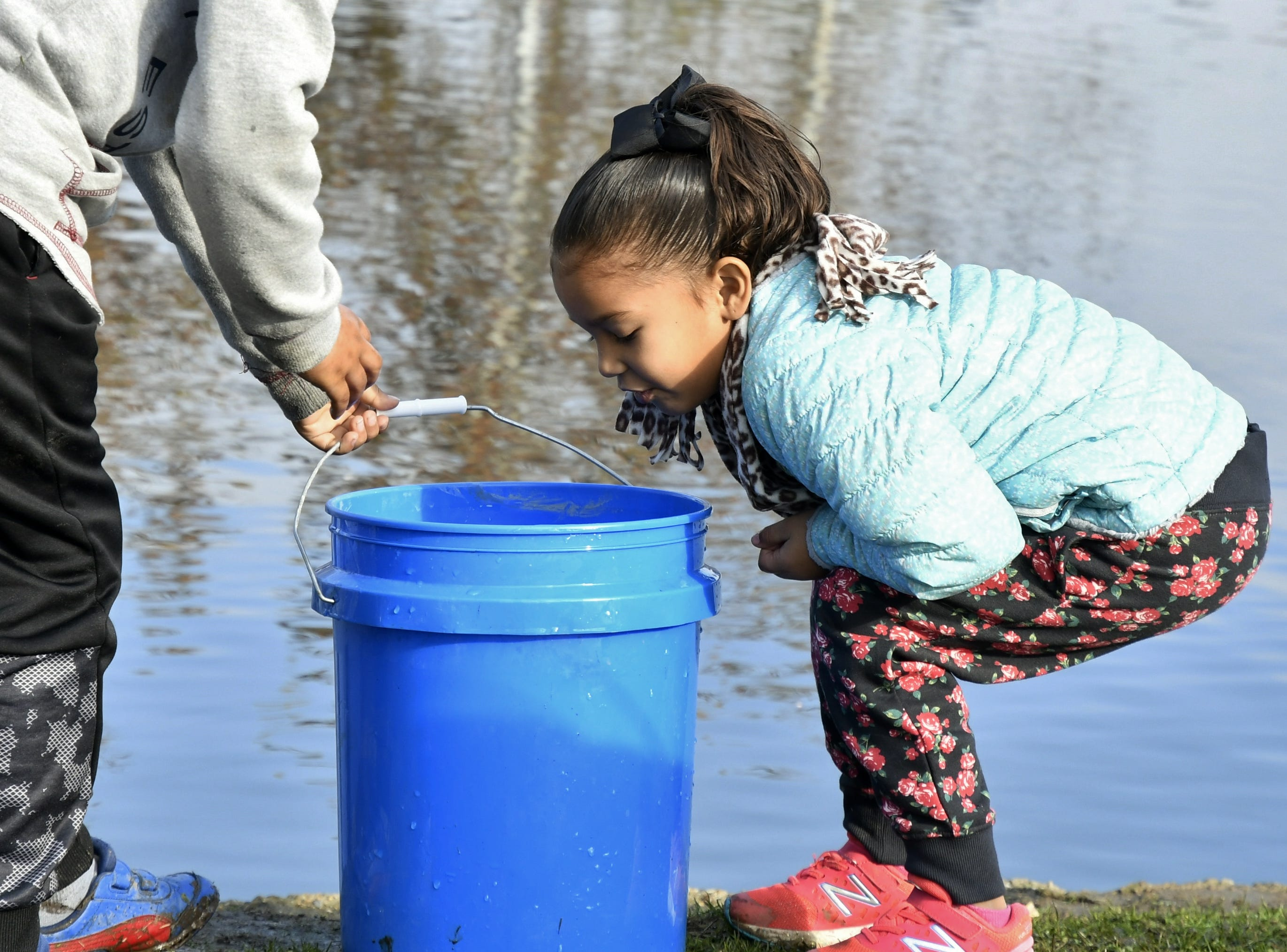 Audrina Delgado, 5, takes a look at the fish she caught at the annual Tulare Parks and Recreation Trout Fishing Derby on Saturday, December 1, 2018.