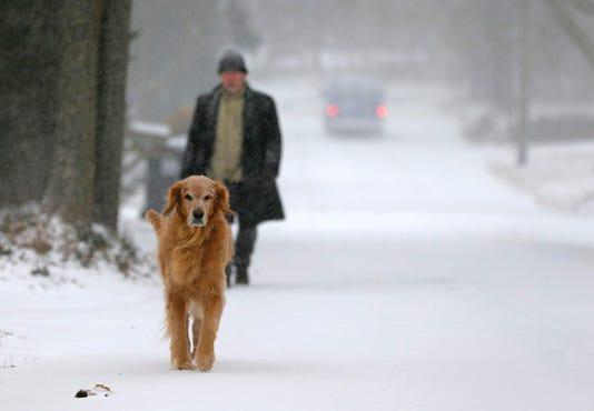 49 Dog Walking