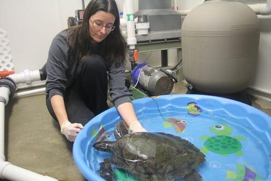 Eco Ed sea turtle 1