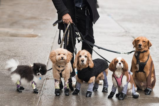 Walkee Paws Waterproof Dog Leggings ($19.99 to $29.99 depending on size) are the new comfortable and stylish way to keep pups' feet clean, dry and safe without the hassle of booths.