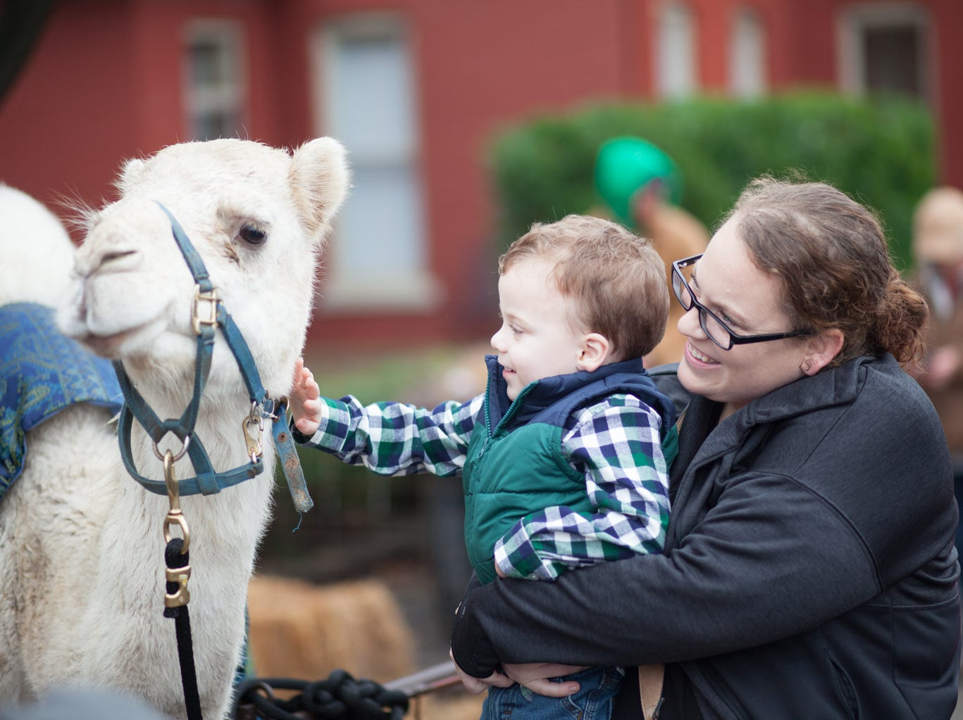The live nativity scene at the Spirit Fest drew many attendees who wanted to pet live camels and donkeys on Saturday, Dec. 1, 2018, in Clarksville, Tenn.