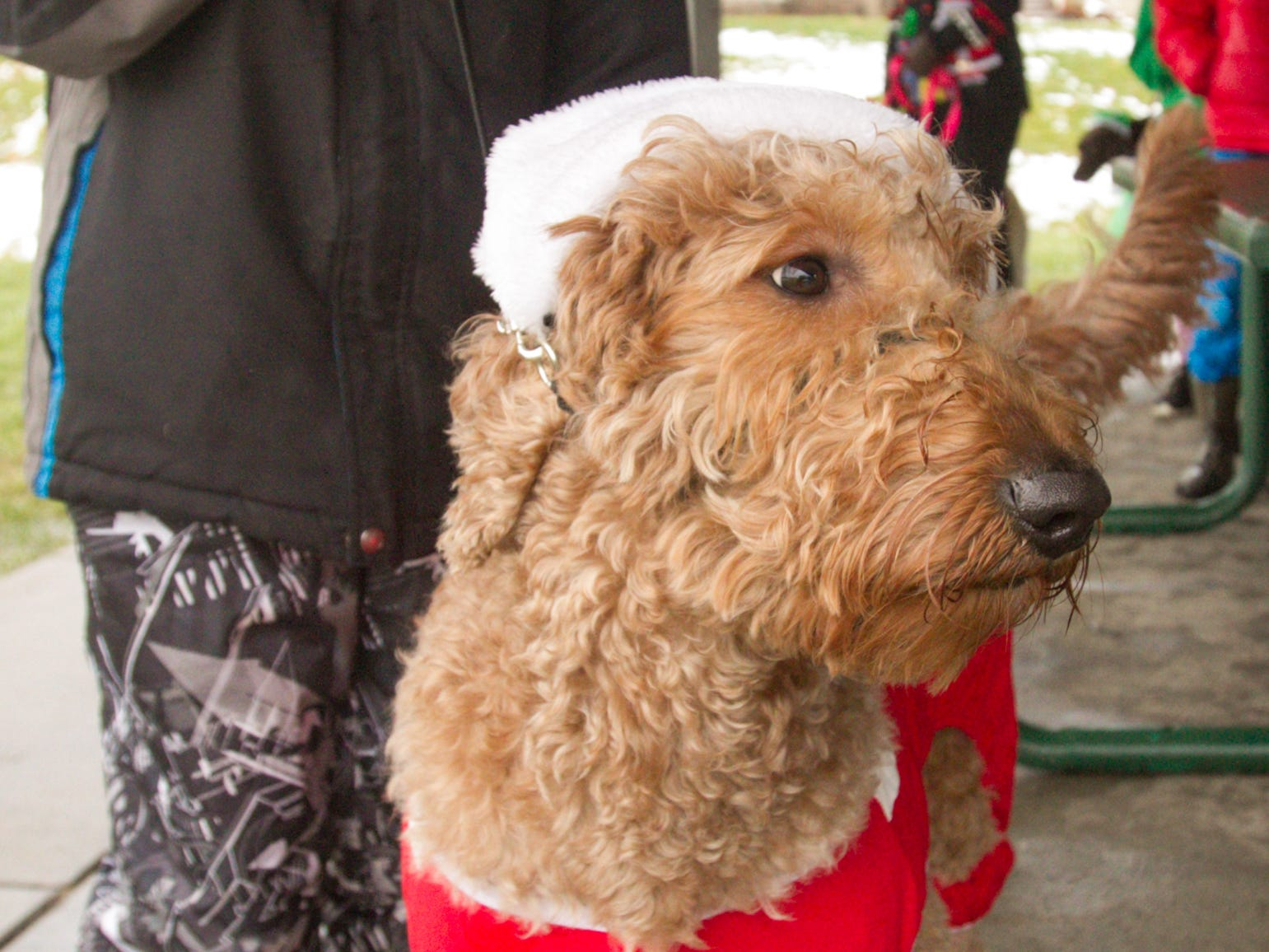 Poppy took second place in the pet parade at the Christmas in the 'Ville Saturday, Dec. 1, 2018.