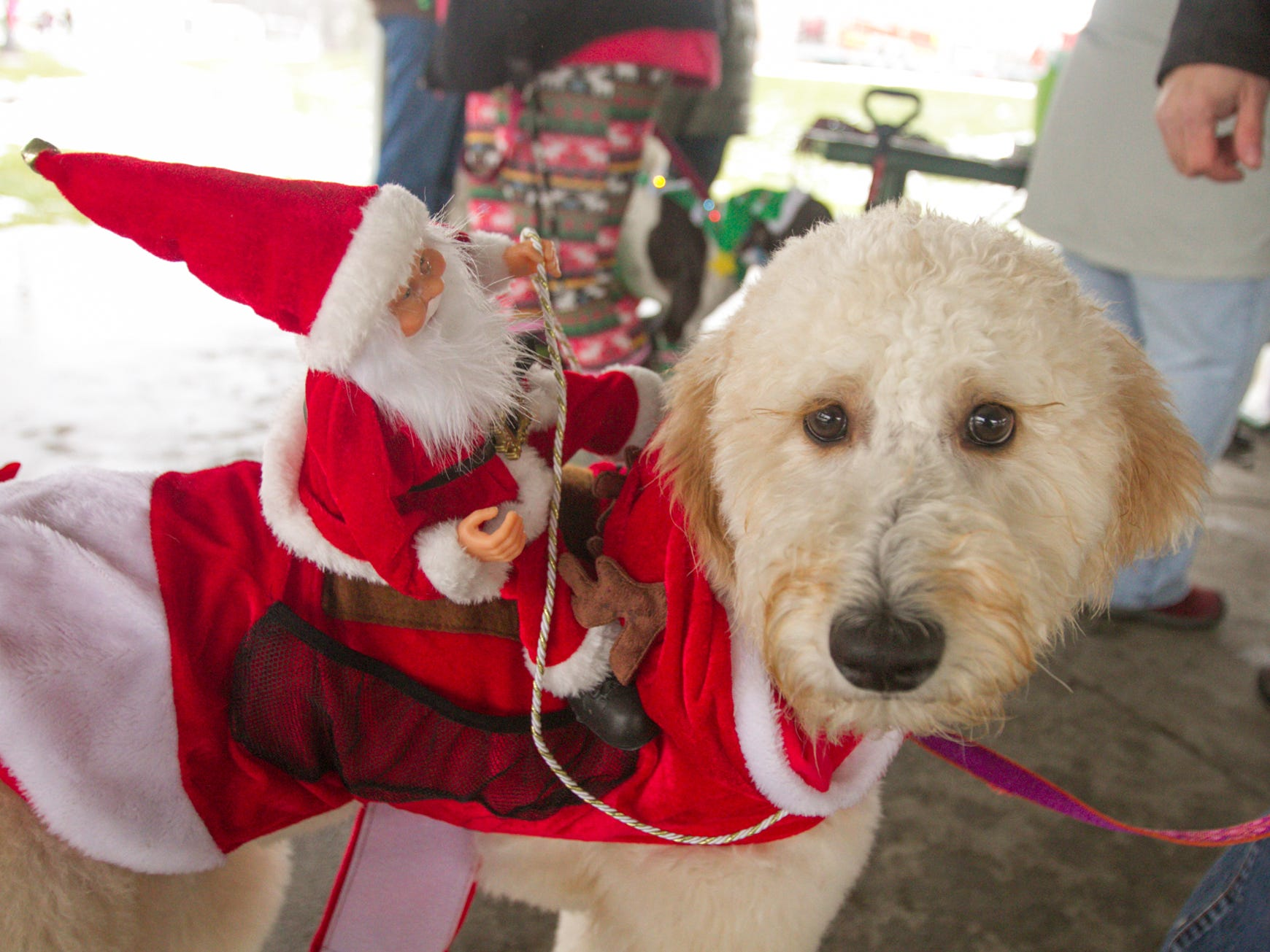 7-month-old Zoey, leashed by owner Ron Johnson, gives Santa a ride on her back for the pet parade, part of the Christmas in the 'Ville activities Saturday, Dec. 1, 2018.