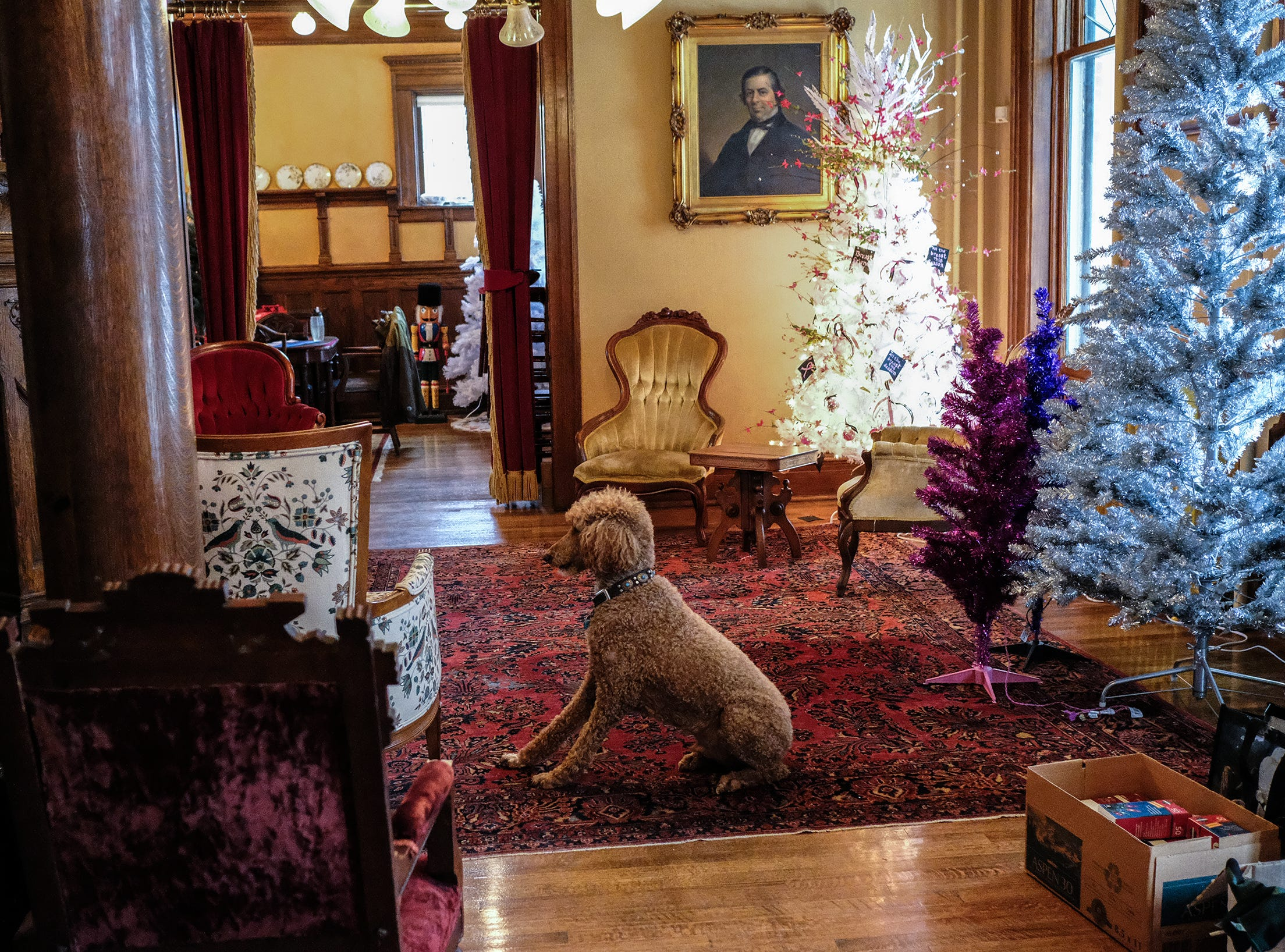 As people start to decorate trees for the annual A Festival of Trees at the Turner-Dodge House, Barron greets them as they come in Saturday, Dec. 1, 2018.