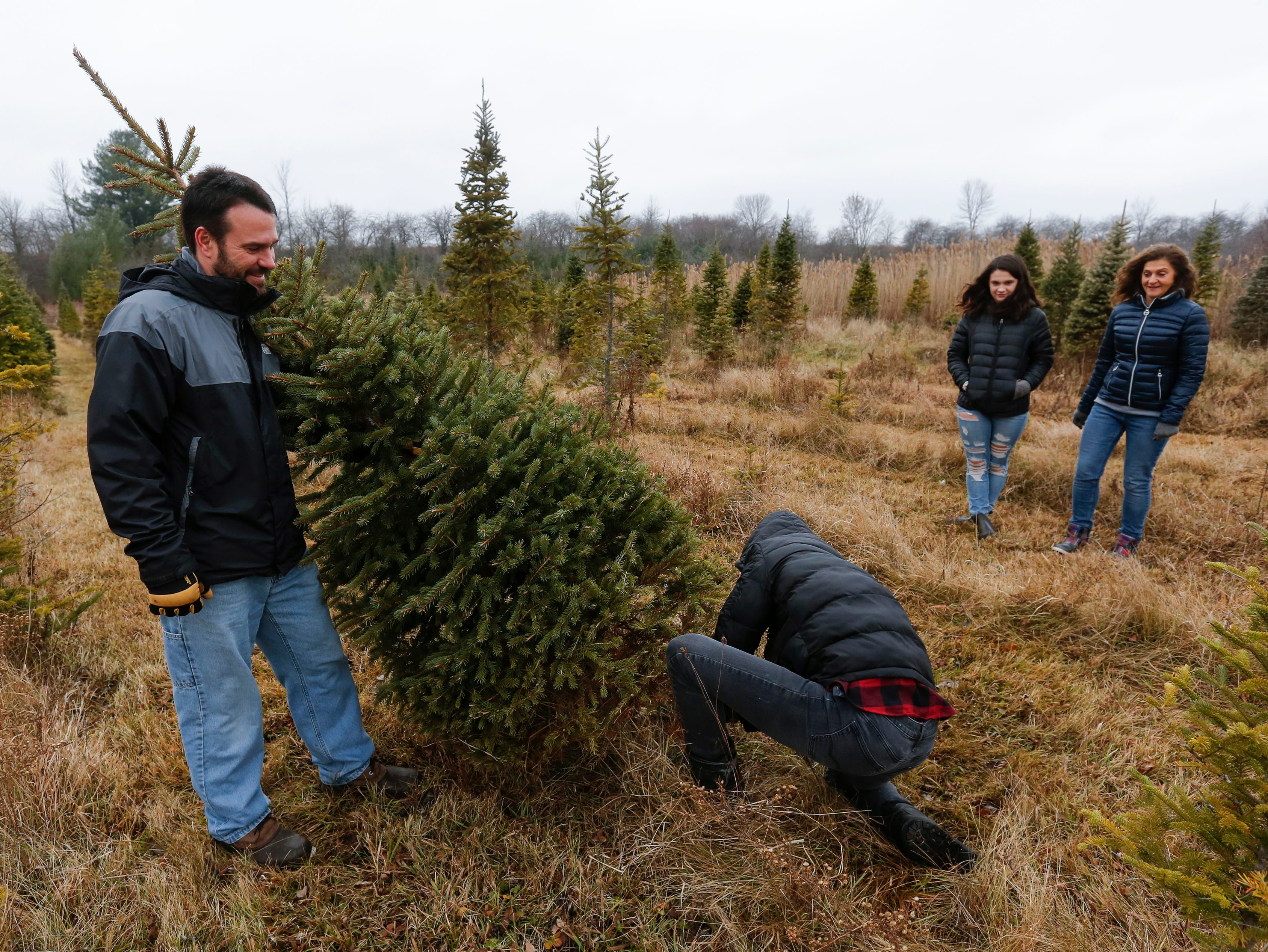 Adam Klarkowski, of Manitowoc, holds the tree as his son Brady, 15, saws away while mom Amy and sister Ava, 14, watch with excitement at Taylor Trees Saturday, December 1, 2018, in Mishicot, Wis. Joshua Clark/USA TODAY NETWORK-Wisconsin