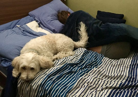 After I get up, the dog gets onto my son's bed. Dogs sleep with their owners for comfort and security.