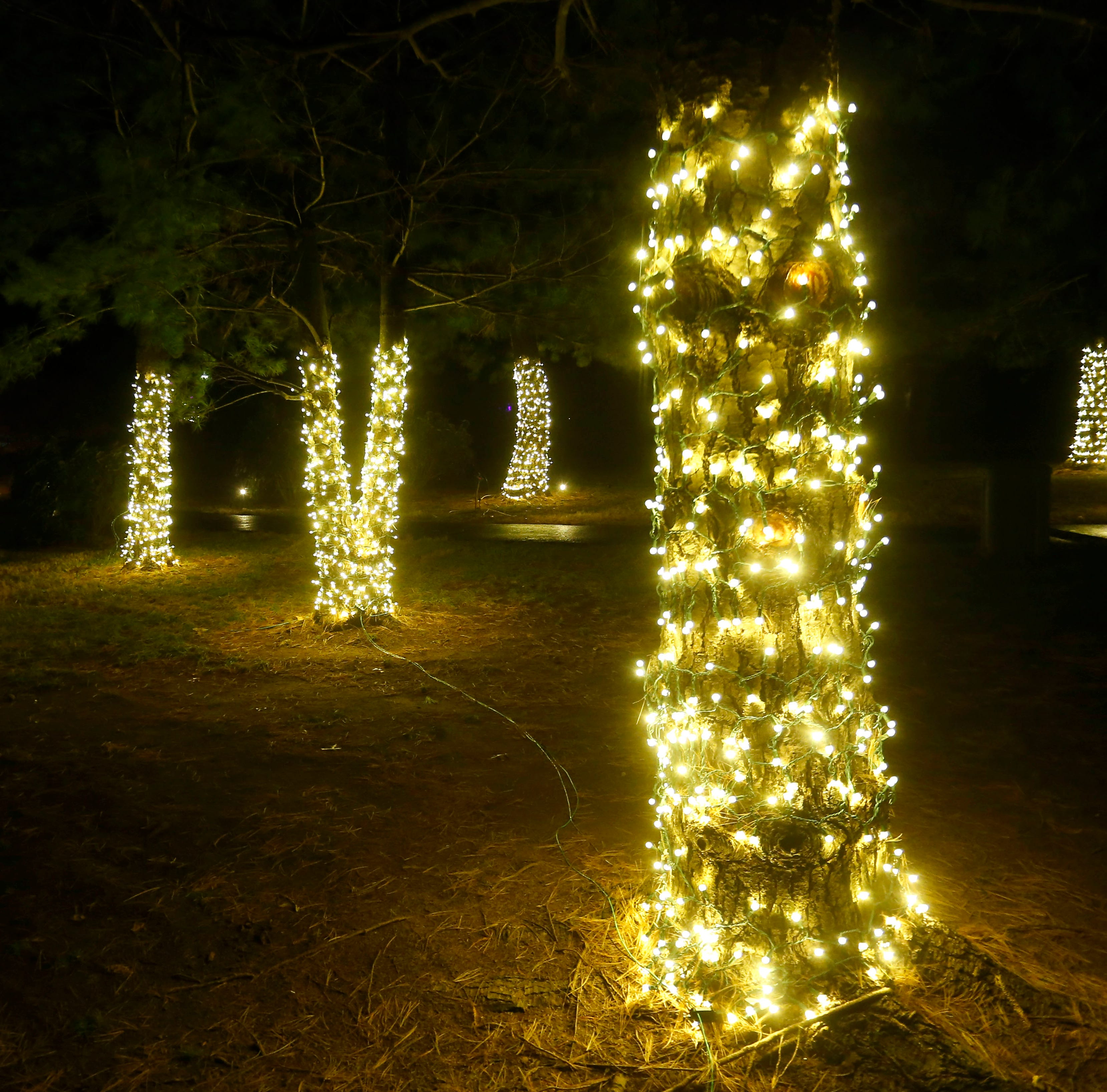 See the Japanese stroll garden at night, with new lights