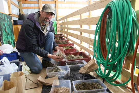 Josh Dyer, the director of the Crawford Park District, holds a few prairie plant seeds. The district's Earth Day Fair this weekend will feature a native plant sale.