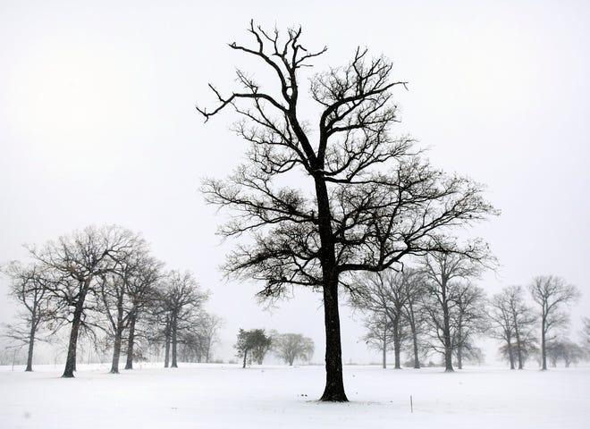 Snow seen on Belle Isle in Detroit  on Sunday, Feb. 1, 2015.