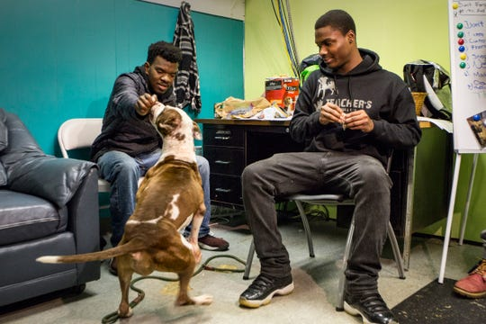 Marnez McBride, 19, left, and Tion Neves of Covenant House Michigan work with Paisley, a pitbull who came to the shelter with heart worm, during a Teacher's Pet training at Detroit Animal Care and Control in Detroit on Wednesday, Nov. 7, 2018.  Animals must be treated for heart worm outside shelters in a calm, quiet home due to the stress it puts on their hearts.