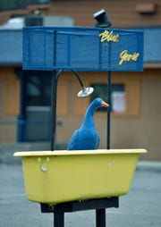 A blue goose figure is displayed in a yellow bath tub, under a shower head, in front of the Blue Goose Inn parking lot.