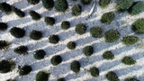 Watts Christmas Trees and Sparkle Shop at Traders Point Creamery in Zionsville as it looks from IndyStar's drone.