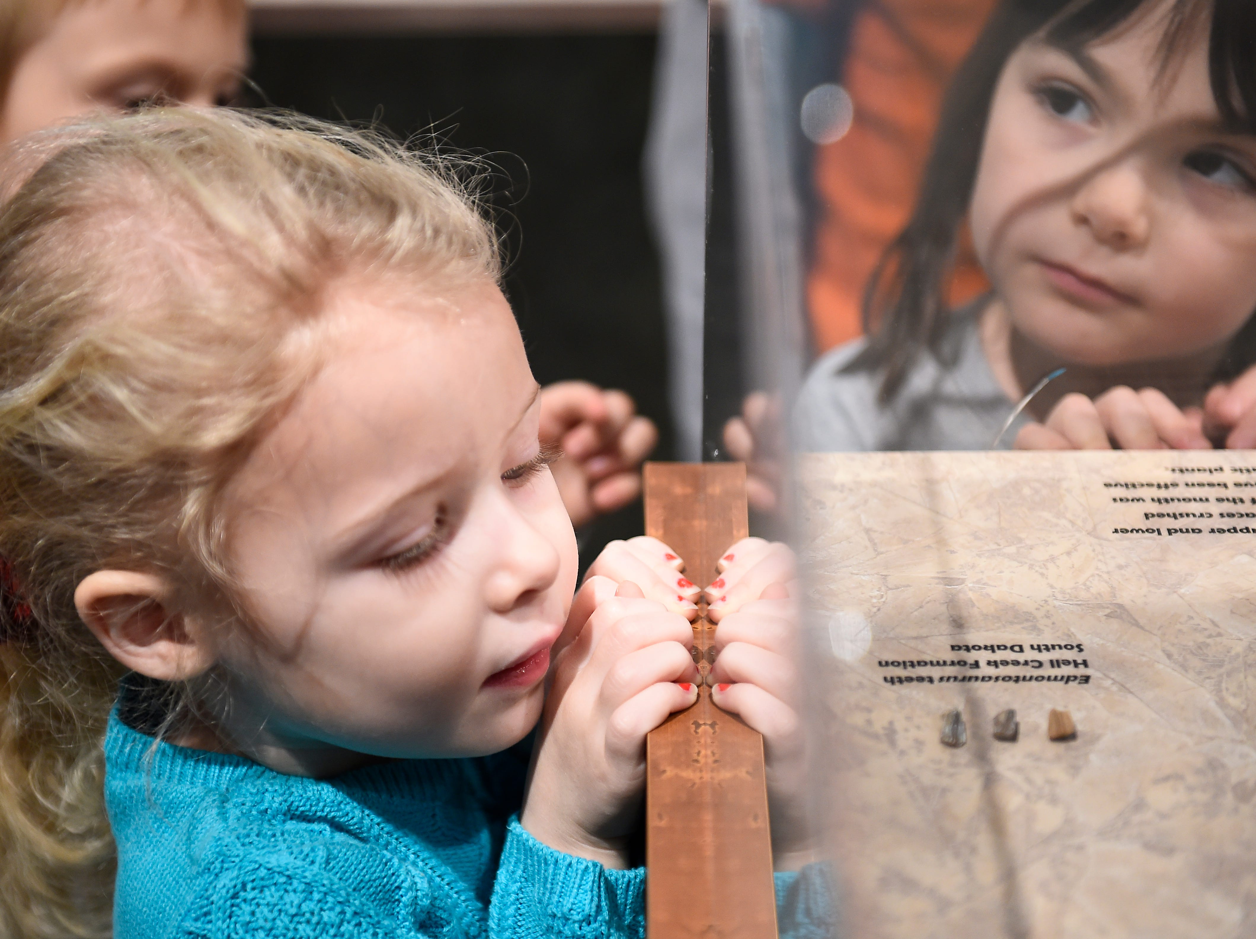 Four year-old Rose-Helen Lefebvre, left, takes a close up look at dinosaur teeth during a free stroller tour in the Geology and Fossil History gallery at the McClung Museum of Natural History and Culture, Monday, Jan. 12, 2014. The event is part of a monthly series for young children.