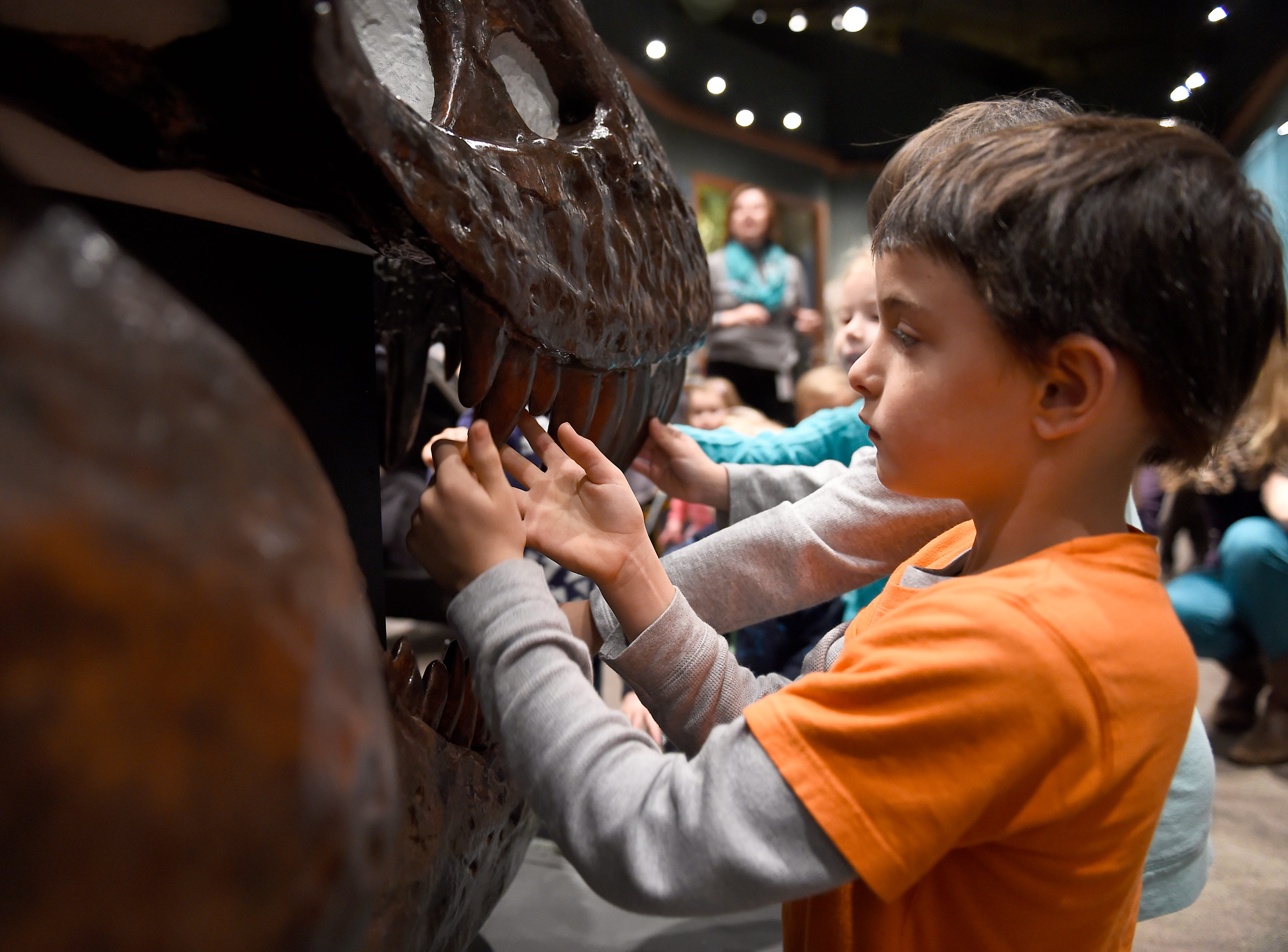 Seven year-old Preston Zoder inspects the teeth of a tyrannosaurus rex during a free stroller tour in the Geology and Fossil History gallery at the McClung Museum of Natural History and Culture, Monday, Jan. 12, 2014. The event is part of a monthly series for young children.