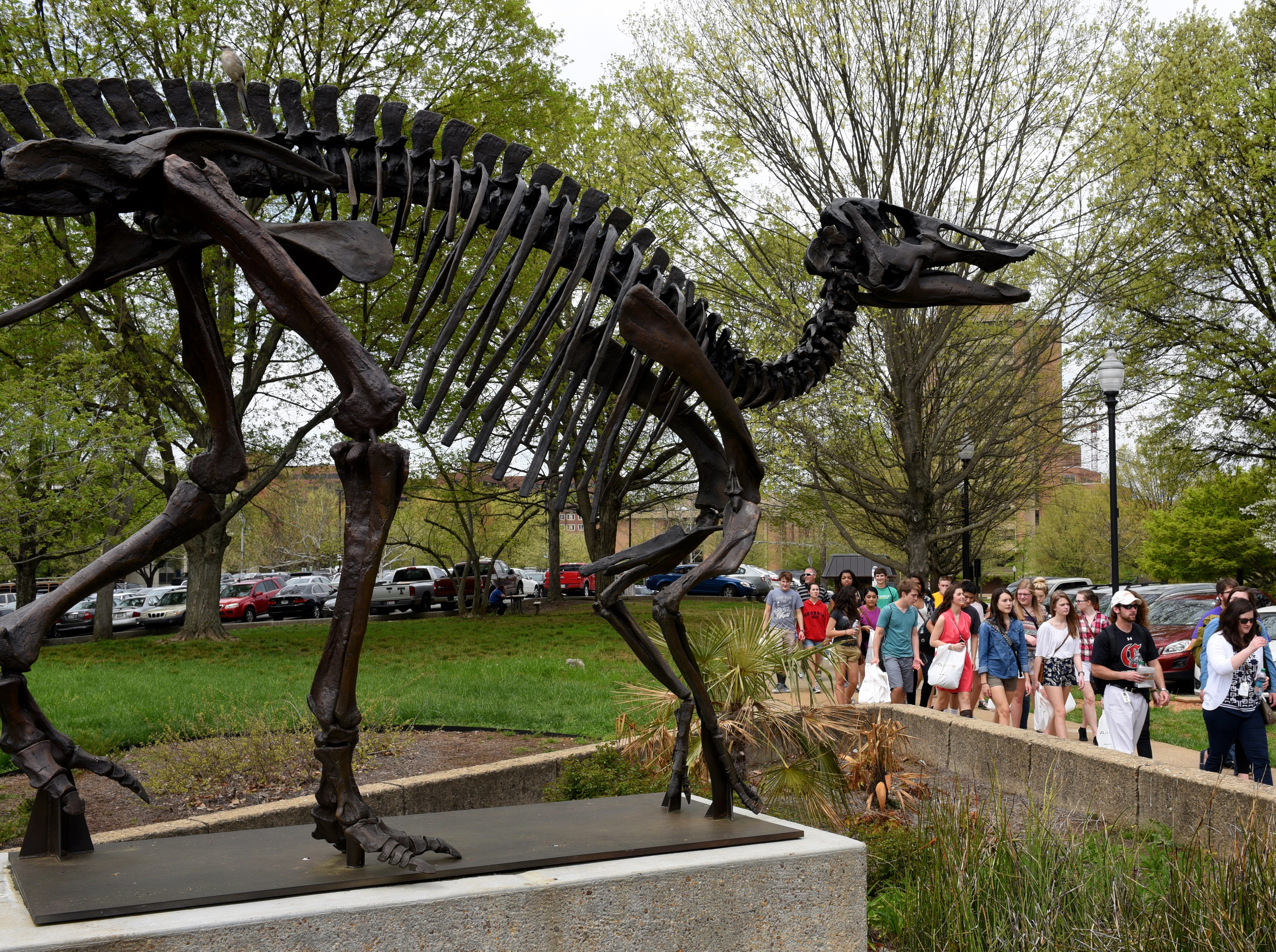 Central High School students touring the UT campus walk past the bronze dinosaur skeleton on their way inside McClung Museum Thursday, Apr. 9, 2015. UT is using the program as a recruiting tool for students in advanced placement history classes in area high schools.