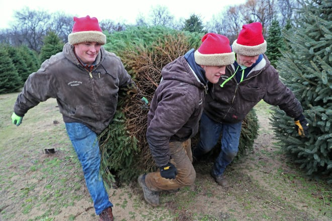 Aaron Weisflog (from left), Caden Knauer and Matthew Likins haul a large tree for a customer at Trees For Less Nursery in Grafton.