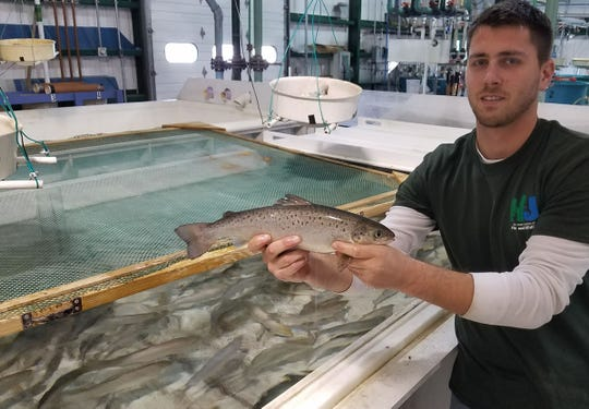 New Jersey Department of Environmental Protection fish hatchery worker Nick Ruberto holds a landlocked salmon destined for a state-managed lake.