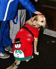 ": Dog ""Bo"".  Holiday festivities along East Ridgewood Avenue in Ridgewood on Nov. 30."