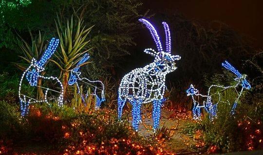 Figuras de animales iluminadas forman parte del evento ZooLights en el Zoológico de Phoenix.